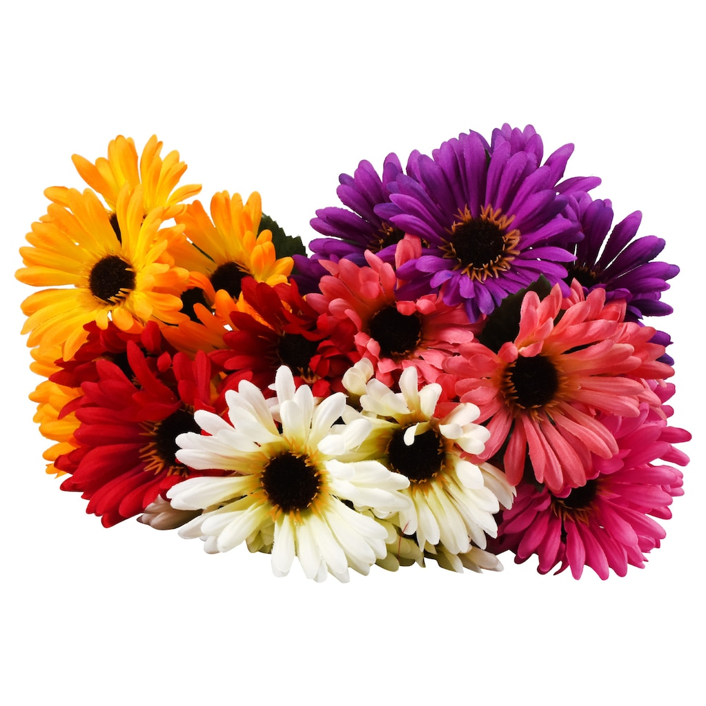 Gerbera Daisy Bushes Dollar Tree Inc